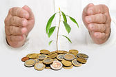 Hands protecting avocado seedling growing from pile of coins — Stock Photo