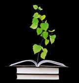 árbol crece de libro abierto — Foto de Stock