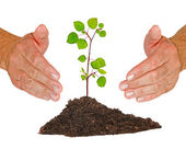 Sapling protected by hands — Stock Photo
