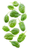 Spinach leaves — 图库照片