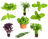 Set with different herbs and greens — Stock Photo