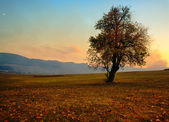 Single fall tree — Stock Photo