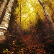 Fall forest wallpaper — Stock Photo #7250888