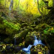 Fall forest stream — Stock Photo