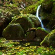 Stock Photo: Forest stream