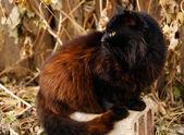Black domestic cat — Stock Photo