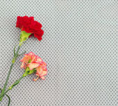 Two carnations on black veiling — Stock Photo