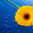 Stock Photo: Yellow flower on blue surface