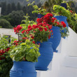 White stairs decorated with red flowers in blue pots ZiIsland of Kos Gree — Stockfoto #7160326