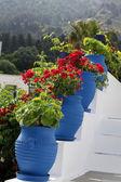 Escaliers blancs décorés avec des fleurs rouges en pots bleu zia île de kos gree — Photo