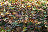 Impression of leaves and autumn colors — Stock Photo