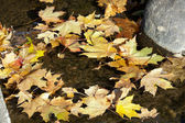 Colorful leaves lying in water — Stock Photo