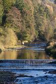 Berg rivier in herfst kleuren — Stockfoto