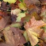 Постер, плакат: Impression of leaves and autumn colors