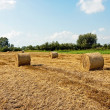 Hay balls — Stock Photo