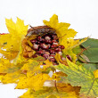 Стоковое фото: Autumn leaves and chestnuts