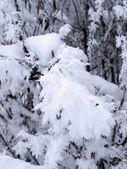 Ramas congelados en la nieve — Foto de Stock