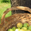 Yellow and green bio apples in basket — Stock Photo