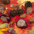 Acorn and chestnut — Stock Photo