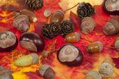 Acorn and chestnut — Stock Photo