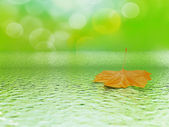 Single orange mapple leaf — Stock Photo