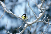 Titmouse on a snow covered branch — Stock Photo