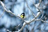 Paro en una rama cubierto de nieve — Foto de Stock