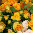 Stock Photo: Roses of white and yellow color