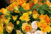 Roses of white and yellow color — Stock Photo