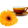 Stock Photo: Bright orange flower and cup of tea