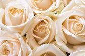 穏やかなバラ — ストック写真
