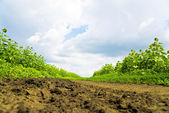 Dirty clods on a country road — Stock Photo