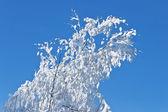 Schnee bedeckte branch — Stockfoto