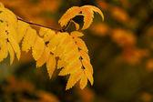 Yellow branch — Stock Photo