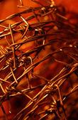 Golden Thorns — Stock Photo