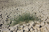 Grass on dry soil — Stock Photo