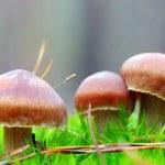 cogumelos crescendo na floresta — Fotografia Stock  #7662778