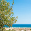 Mediterranebackground — Stock Photo #7269836