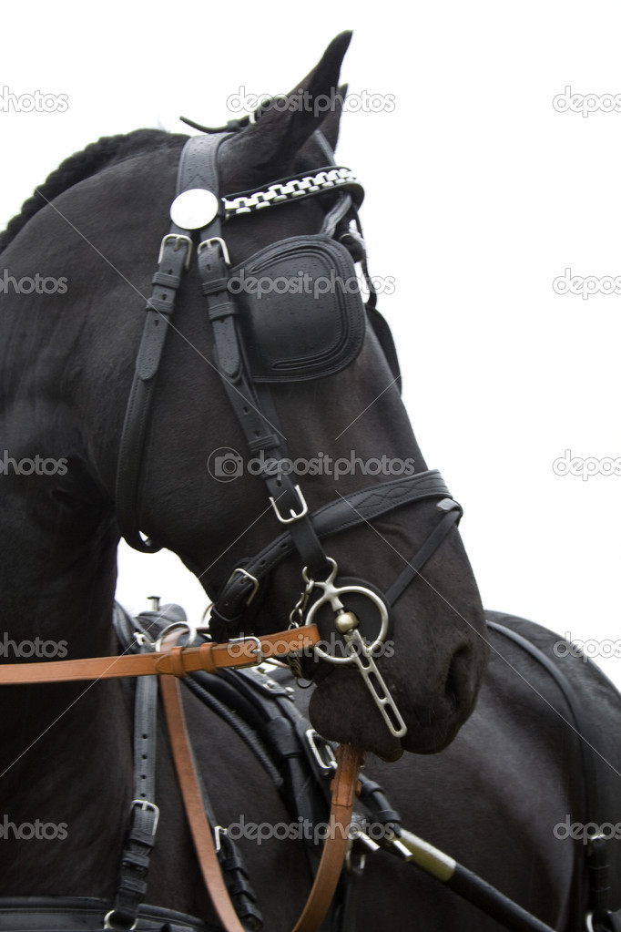 Black horse in harness with blinders on the eyes. Photographed in profile. — Stock Photo #6839606