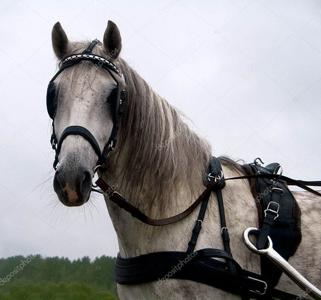 The white horse in a harness close to the background of the autumn sky. — Stock Photo #6839628