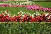 Flower-bed — Stock Photo