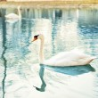 White swan at lake — Stock Photo #6836860