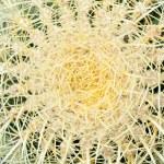 Yellow cactus flower — Stock Photo #6837888