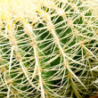 Cactus, close up — Stock Photo