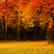 Frest in autumn — Stock Photo