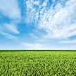 Fresh green grass on a hill — Stock Photo #6895603