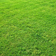 Fresh green grass on a hill — Stock Photo #6895604