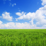 Fresh green grass on a hill — Stock Photo