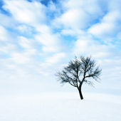 Lonely tree in snow — Stok fotoğraf