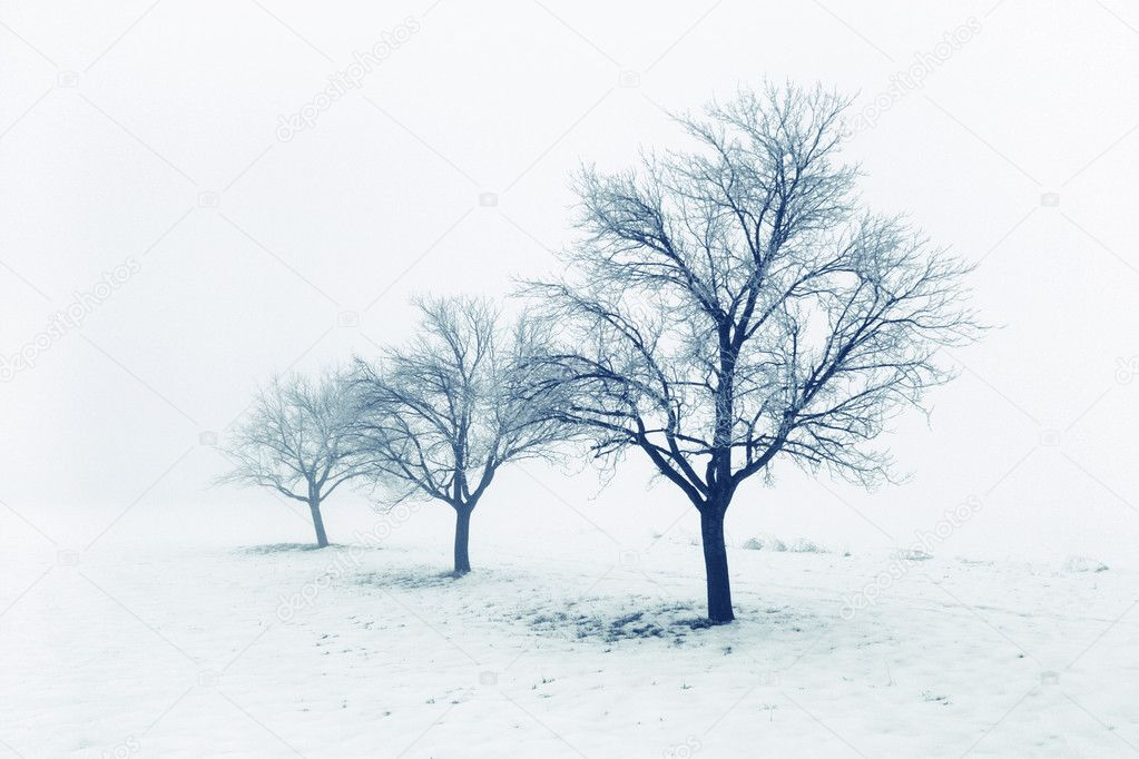 Tree in snow — Stock Photo #7731424